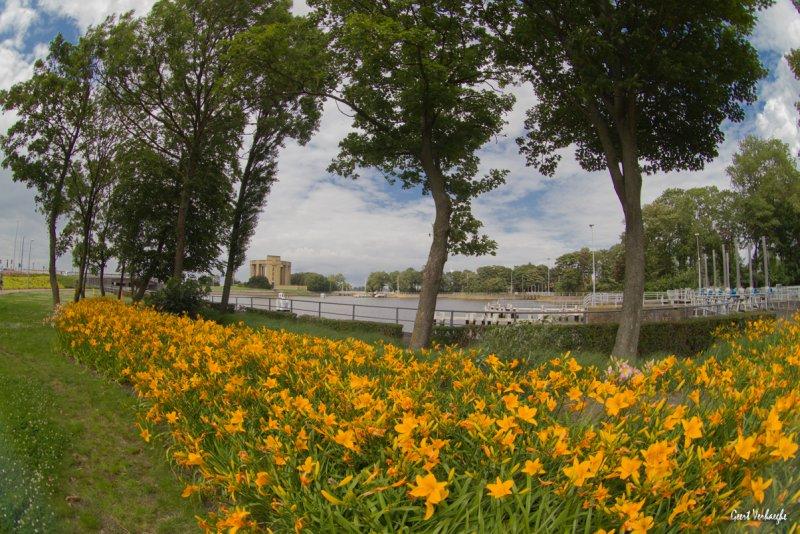 bloemenweelde met de Paasvakantie Nieuwpoort
