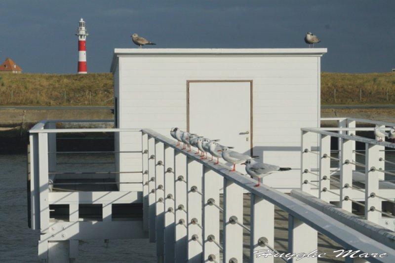 Wandelen langsheen de havengeul Nieuwpoort